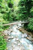 一条河和在雨林的一座桥梁 免版税库存图片