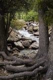 一条河和树在山与根在地面顶部 免版税库存照片
