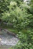 一条河在一个城市公园在马斯特里赫特,荷兰 图库摄影
