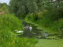 一条河在英国 免版税图库摄影