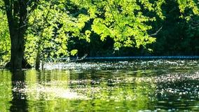 一条河的不可思议的水表面日落的,在一个夏日 鲽鱼 图库摄影