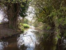 一条河的射击有大量的在边的树 图库摄影