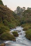 一条河的长的曝光在微明的森林里 免版税库存照片
