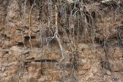 一条河的高河岸有树根的  库存照片