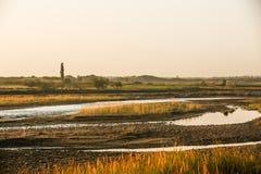 一条沼泽地小河在沙漠 库存照片