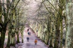 一条沿途有树的大道的步行者在冬天 库存照片