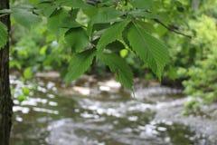 一条流动的河 免版税库存图片