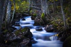 一条浅河在森林里在Oslos 免版税库存照片