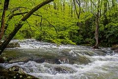 一条浪端的白色泡沫小河围拢与在Smokies的绿叶 库存图片
