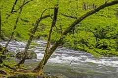 一条浪端的白色泡沫小河围拢与在Smokies的绿叶 免版税库存照片