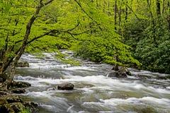 一条浪端的白色泡沫小河围拢与在Smokies的绿叶 免版税库存图片
