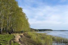 一条深河的岸的春天森林 免版税图库摄影