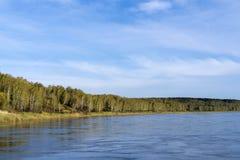 一条深河的岸的春天森林 免版税库存图片