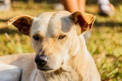 一条混杂的品种狗的接近的画象 图库摄影
