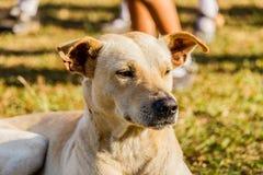 一条混杂的品种狗的接近的画象 库存照片