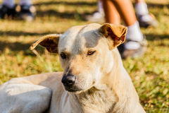 一条混杂的品种狗的接近的画象 免版税库存照片