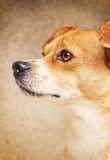 一条混杂的品种狗的纵向 库存照片