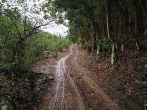 一条湿土路在一个农场的一个森林里在一个雨天 库存图片
