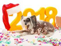 一条滑稽的狗在五彩纸屑说谎反对风景背景2018年 背景位隔离白色 户内 免版税库存照片