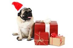 一条滑稽的狗,穿戴在圣诞节帽子,在礼物附近坐 查出 库存图片