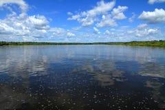 一条热带河的中部 免版税库存图片