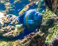 一条热带鱼的照片在珊瑚礁的 免版税库存照片