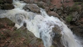 一条狂放的小河在巴法力亚森林里 股票视频
