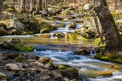 一条狂放的山鳟鱼小河的春天视图 免版税库存照片