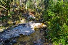 一条狂放的河的美丽的风景急流在jung的中部 免版税库存图片