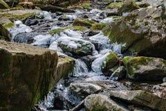 一条狂放的鳟鱼小河的冬天图- 2 免版税库存照片