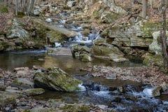 一条狂放的鳟鱼小河的冬天图- 2 免版税图库摄影