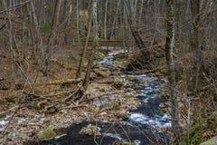 一条狂放的鳟鱼小河的冬天视图 库存图片