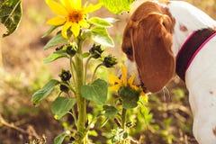 一条狗在庭院里 免版税库存照片