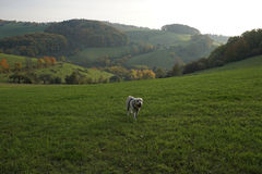 一条狗在秋天 免版税图库摄影