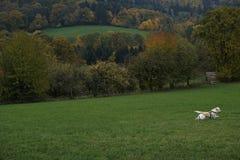 一条狗在秋天 免版税库存照片