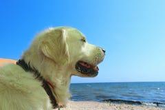 一条狗的播种的射击在海背景的 免版税库存图片