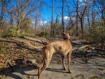 一条狗的画象在森林 免版税库存图片