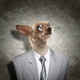 一条狗的滑稽的画象在衣服的 免版税库存照片
