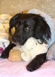 一条狗的画象与哀伤的眼睛的 免版税库存照片