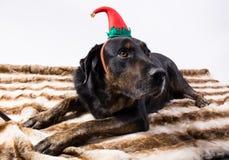 一条狗的画象在乔装的 库存图片