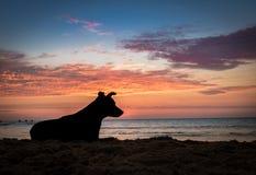一条狗的Silhoutte在日落的在海滩 库存图片