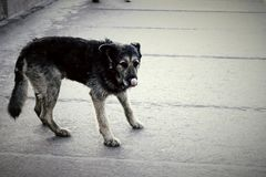 一条狗 免版税库存图片
