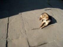 一条狗 库存照片