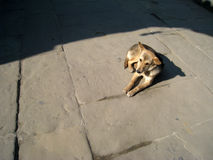 一条狗 库存图片