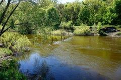 一条狭窄的河的镇静水 在表面上是一个自创水坝由棍子和委员会做成 图库摄影