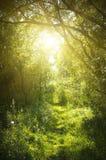 一条狭窄的道路在神仙的森林里 免版税库存照片