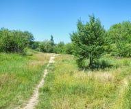 一条狭窄的道路在草和树中 库存图片