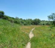 一条狭窄的道路在草和树中 免版税库存照片