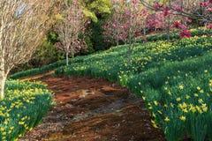 一条生苔路沿在黄水仙和木兰盖的山坡弯曲 免版税库存照片