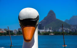 一条白色天鹅脚蹬小船的头有模糊的罗德里戈de弗雷塔斯Lagoon和Dois Irmaos山的在背景 免版税库存照片